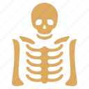 anatomy, bones, dead, diagnosis, radiography, skeleton, xray image icon