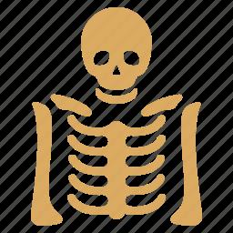 anatomy, bones, dead, diagnosis, radiography, skeleton, xray image icon