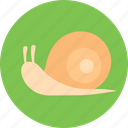 slow, snail