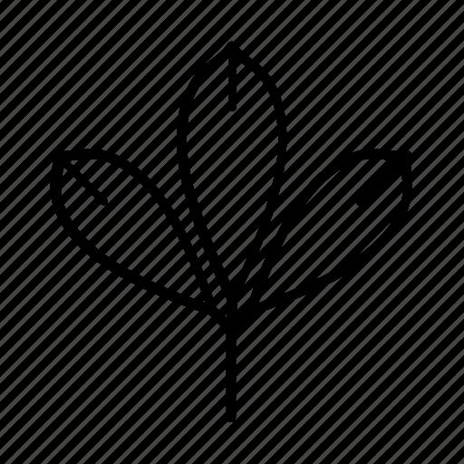 bio, chesnut leaf, leaf, leaves, nature icon