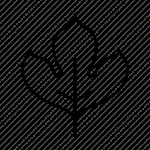 bio, leaf, leaves, lobed leaf, nature icon