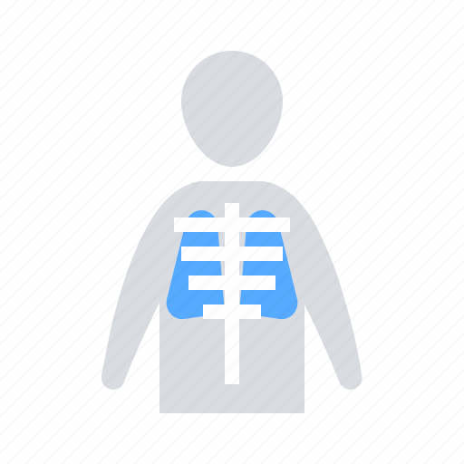 anatomy, lungs, sceleton icon