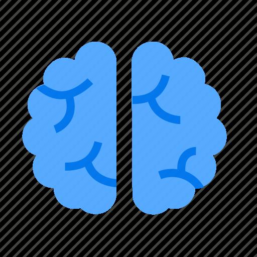 Brain, mind, neuroscience icon - Download on Iconfinder