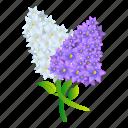 bouquet, floral, flower, lilac, wedding