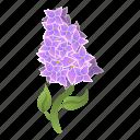 floral, flower, lilac, ornament, season, summer