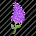 decoration, floral, flower, lilac, spa, wedding
