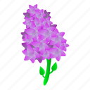 floral, flower, frame, hand, lilac, plant