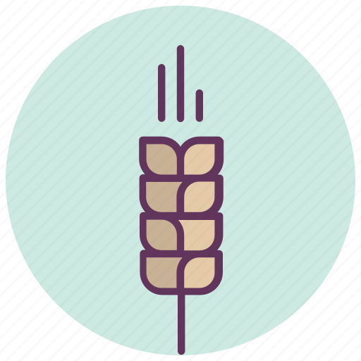 cereal, crop, farming, food, growing, plant, wheat icon