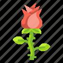 blossom, flower, gift, love, petals, rose, valentine