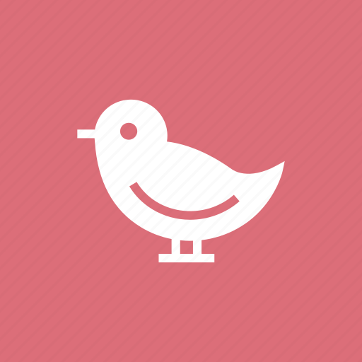 dove, invitation, love, pigeon, wedding icon