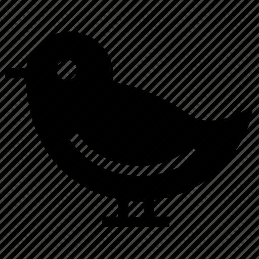 Bird, dove, invitation, love, pigeon, wedding icon icon - Download on Iconfinder