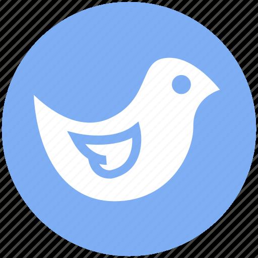 animal, bird, cute, dove, fly, flying, peace icon