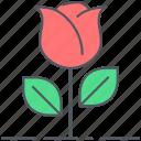 rose, flower, romance, blossom, decoration, valentines, love icon
