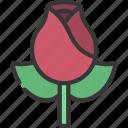 rose, loving, passion, flower, flowers