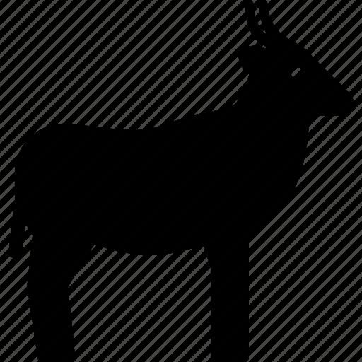 african, animal, antelope, gazelle icon
