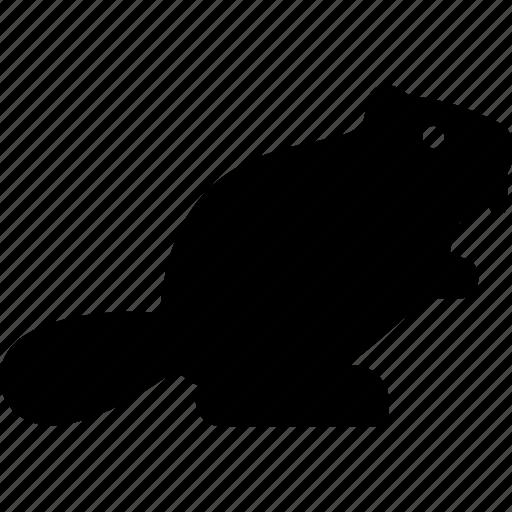 animal, beaver, castor, rodent icon