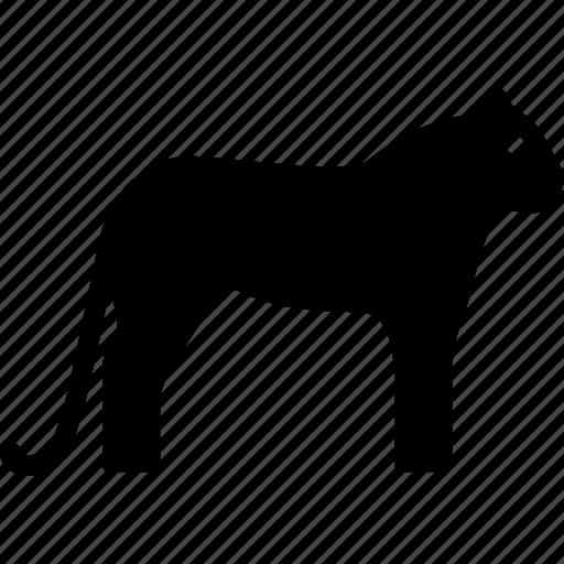 Cheetah, feline, leopard, animal, guepard icon
