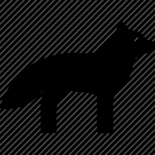 animal, arctic, fox, vixen icon