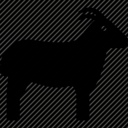 animal, billy goat, goat, herbivore icon