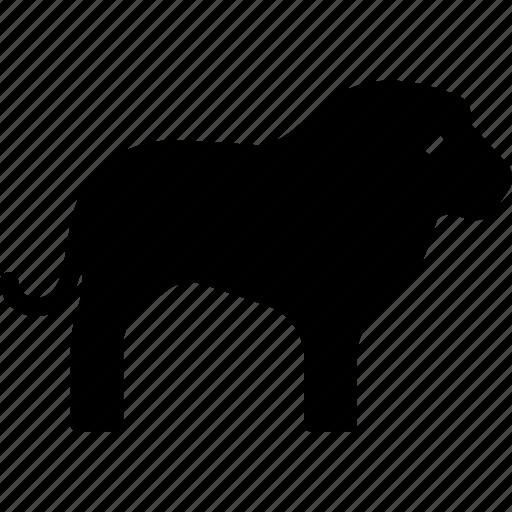 animal, feline, king, lion icon