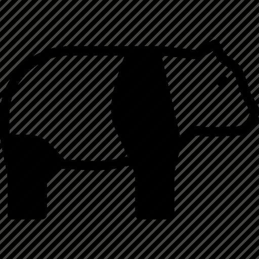 animal, bear, giant, panda icon