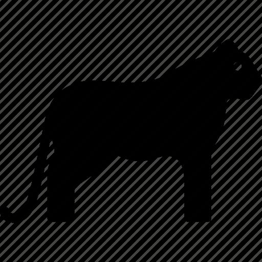 animal, bengal, feline, white icon