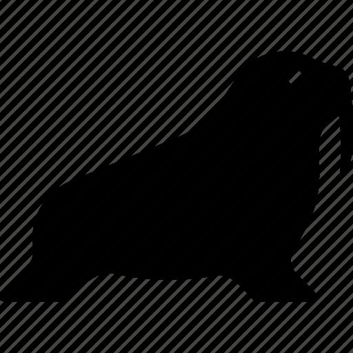 Mammal, pinniped, walrus, animal, marine icon