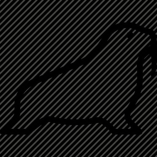 animal, mammal, marine, pinniped, walrus icon