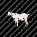 animals, caprinae, goat, goat-antelope, mammal, wild goat icon