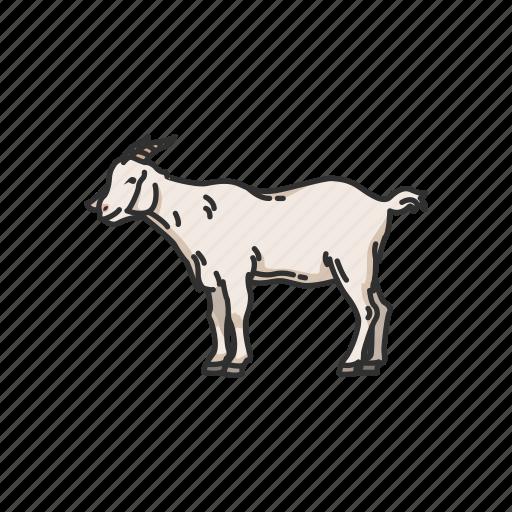 Animals, caprinae, goat, goat-antelope, mammal, wild goat icon - Download on Iconfinder