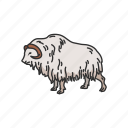 animals, goat, mammal, muskox, ovis, sheep, sheep-ox icon