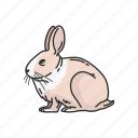 animal, bunny, easter bunny, hare, jack rabbit, mammal, rabbit icon
