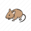 pet, pest, mammal, mouse, house mouse, rodent, animals
