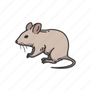 animals, barn mouse, mammal, mouse, rat, rodent icon