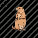 animals, dog, dog mouse, ground squirrel, mammal, prairie dog