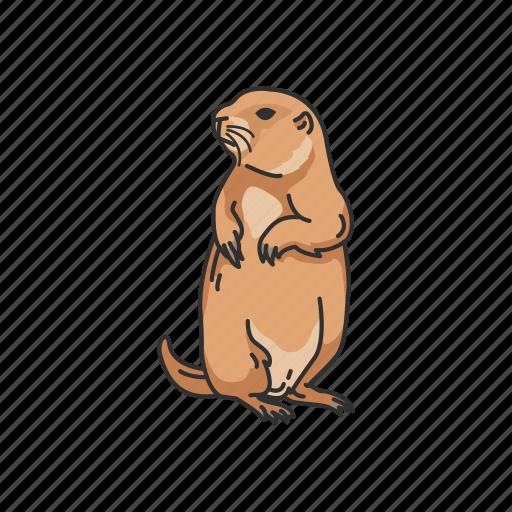 Animals, dog, dog mouse, ground squirrel, mammal, prairie dog icon - Download on Iconfinder