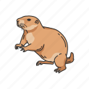 animal, dog mouse, ground squirrel, mammal, prairie dog, rodent, squirrel icon