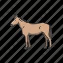 animals, domestic animal, donkey, horse, mammal, mule