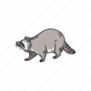 animal, coon, mammals, pest, raccoon, racoon icon