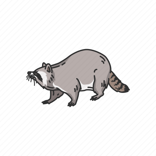 Animal, coon, mammals, pest, raccoon, racoon icon - Download on Iconfinder
