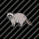 animals, coon, mammal, pest, raccoon, racoon icon