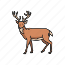 cheetal, buck, mammals, animal, chital, deer icon
