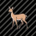 animal, cheetal, chital, deer, doe, mammal, spotted deer