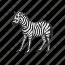 animals, mammal, plains zebra, quagga, wild horse, zebra icon