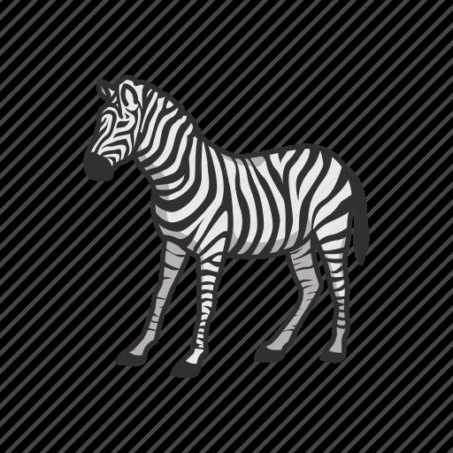 Animals, mammal, plains zebra, quagga, wild horse, zebra icon - Download on Iconfinder