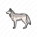 canine, timber wolf, coywolf, mammals, wolf, gray wolf, animals icon