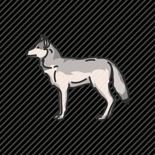 animals, canine, coywolf, gray wolf, mammals, timber wolf, wolf icon