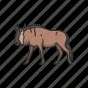 animals, antelopes, brindled gnus, gnus, mammal, wildbeests icon