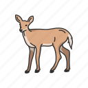 animals, deer, doe, elk, female deer, mammal, musk deer