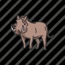 animals, dessert warthog, mammal, pig, warthog icon